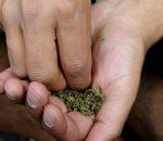 confabulario_marihuana_marcha_bogota